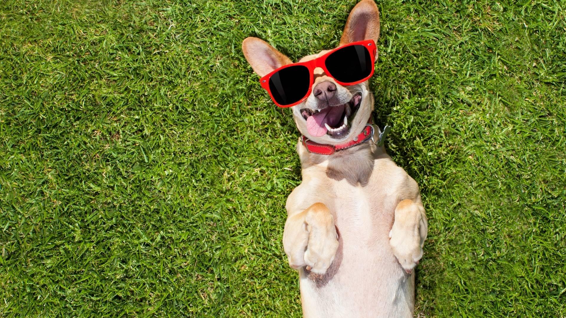 Photo petit chien heureux
